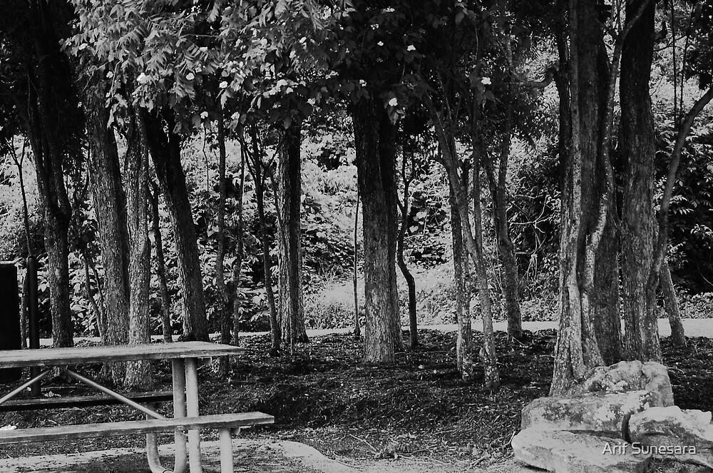 Dark Woods by Arif Sunesara