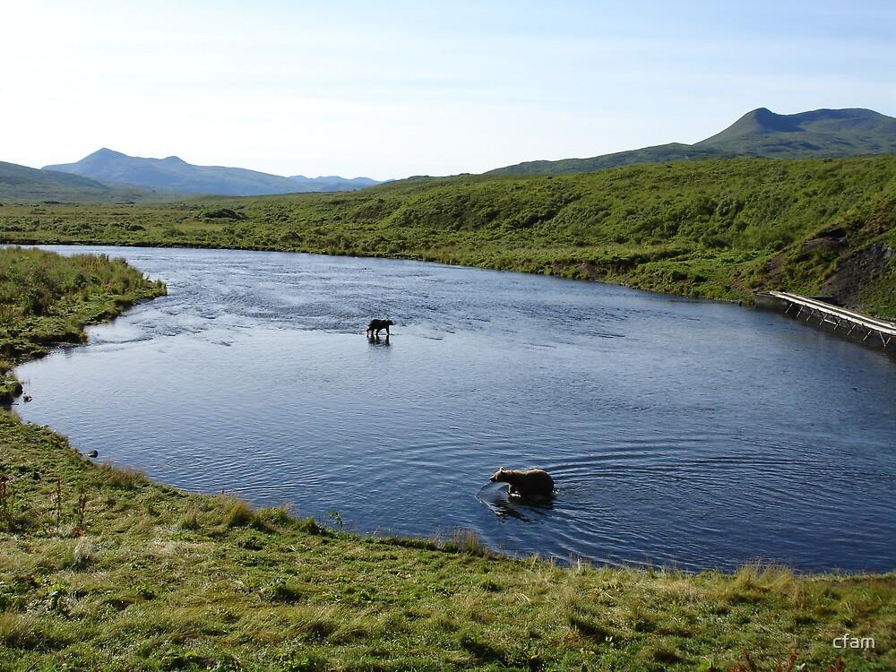 The Bear Crossing by cfam