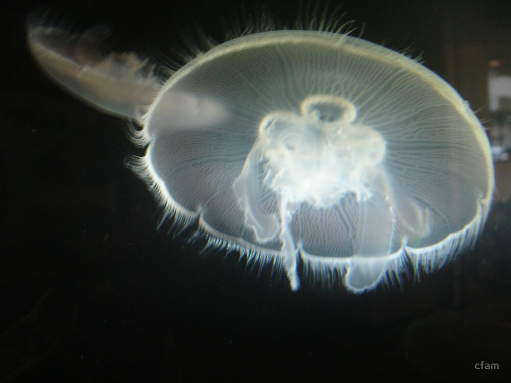 Jellyfish 1 by cfam