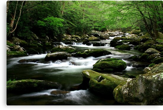 Mossy Mountain Stream by Gary L   Suddath