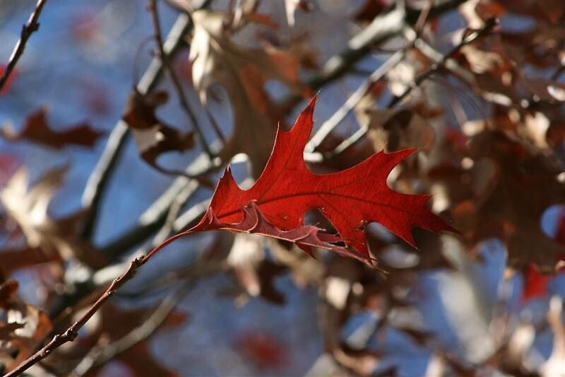 Autumns Gift by mickey altmann