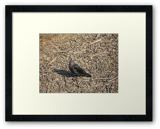 Black Bird by cfam