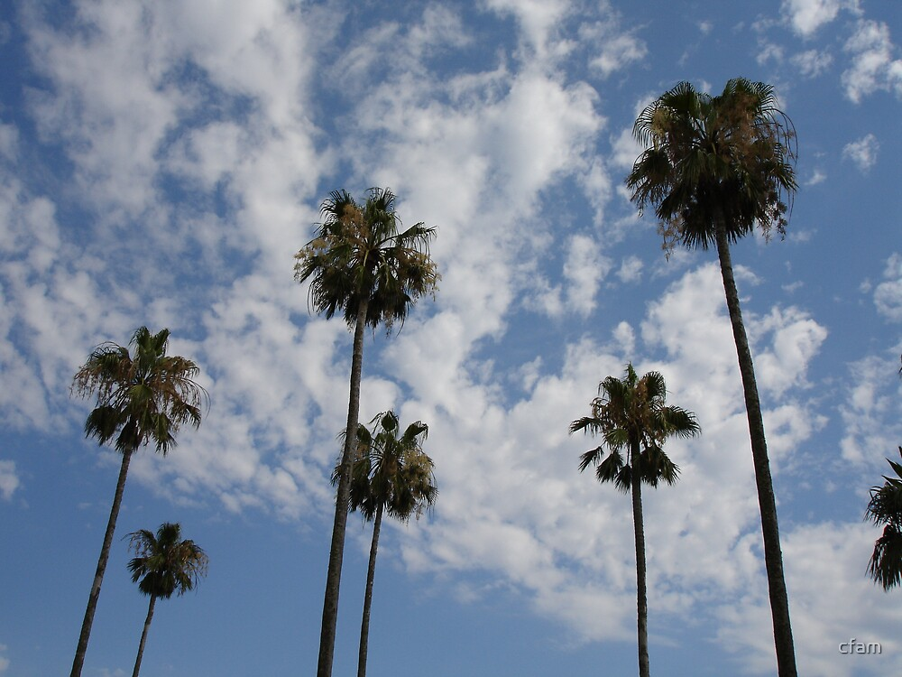 The Palm Trees by cfam