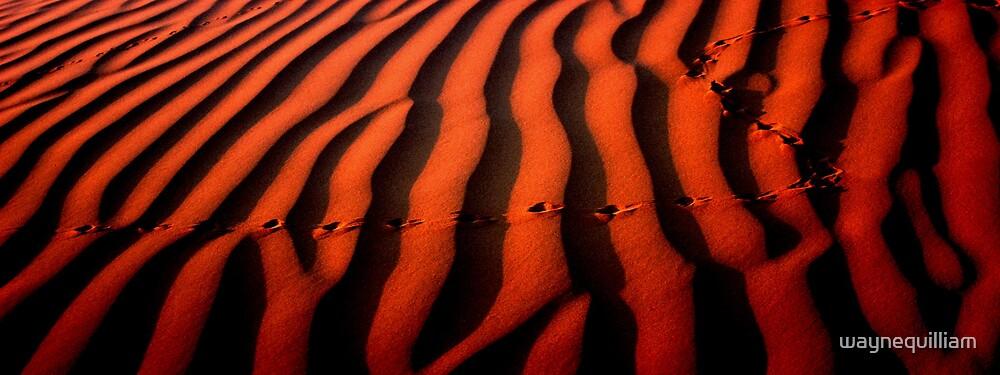 Tracks by waynequilliam