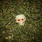 Skull Baby - Nobody Home by barbsobel