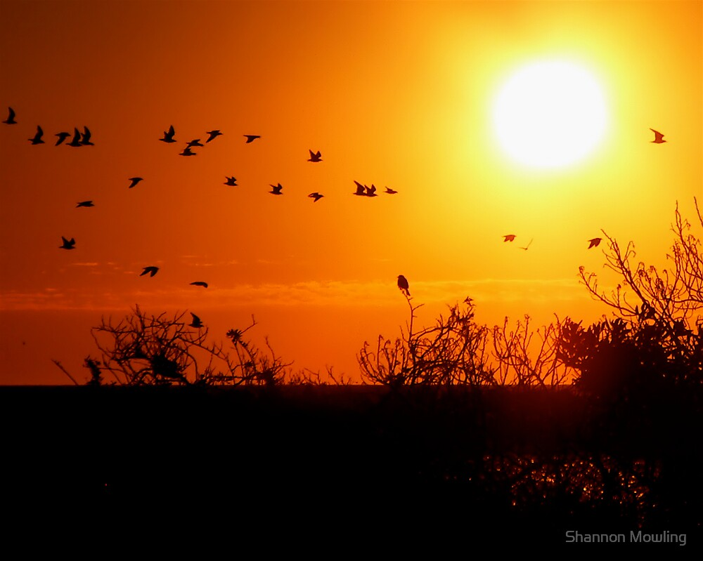 Sunset Flight by Shannon Mowling