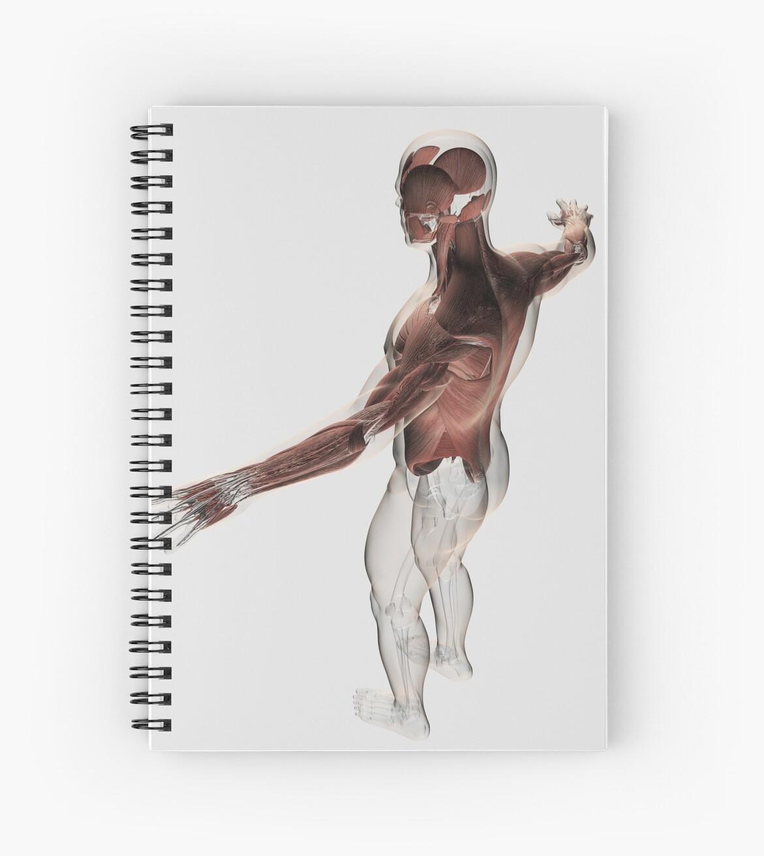 Cuadernos de espiral «Anatomía de los músculos masculinos en la ...