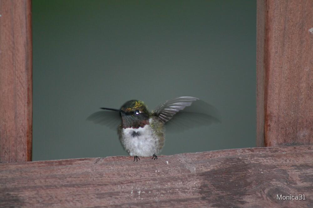 hummingbird taking flight by Monica31
