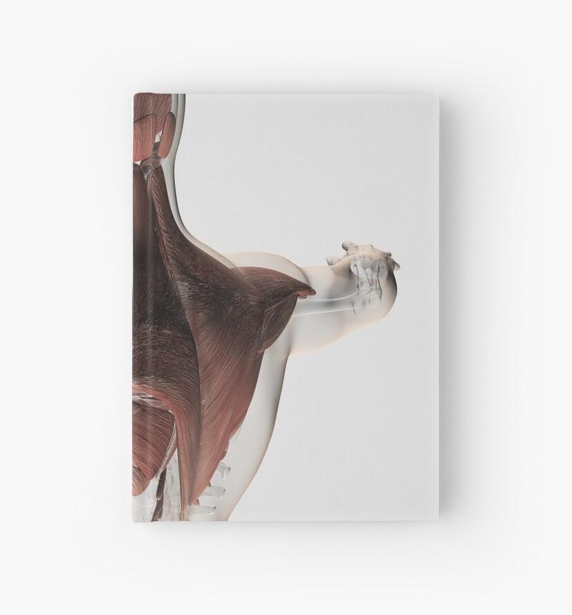 Cuadernos de tapa dura «Anatomía de los músculos masculinos en la ...
