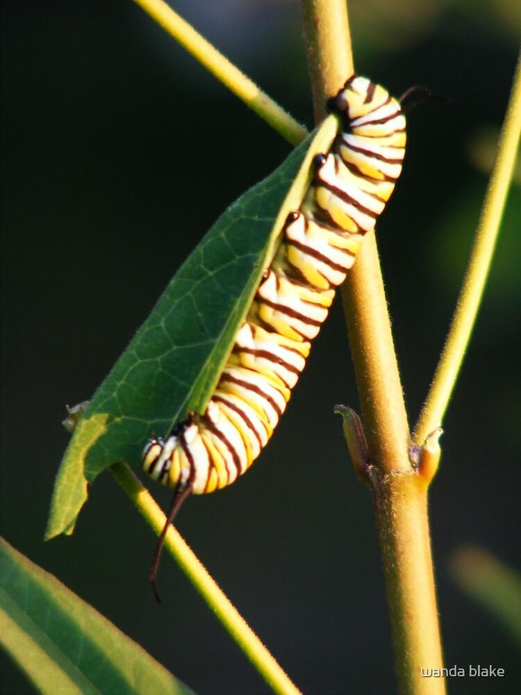 caterpillar by wanda blake