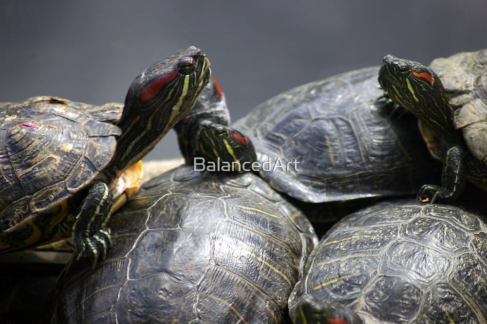 Turtles by BalancedArt
