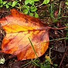Goodbye Autumn by hootonles