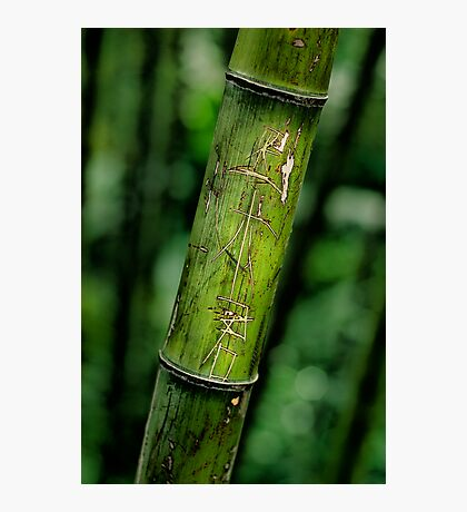 Bamboo Photographic Print