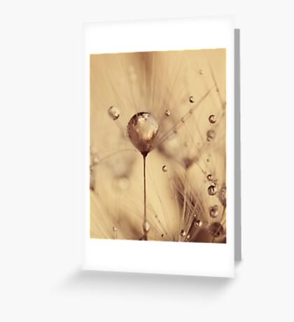 Dandelion - touch of gold Greeting Card