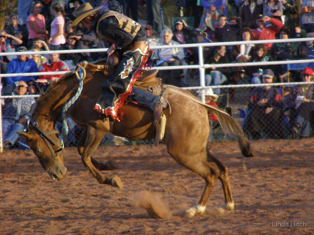 Wilmington Night Rodeo by Linda Hitch