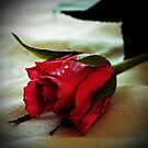Red Rose by Joyce Knorz