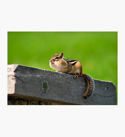 Don't tuch my nuts Photographic Print