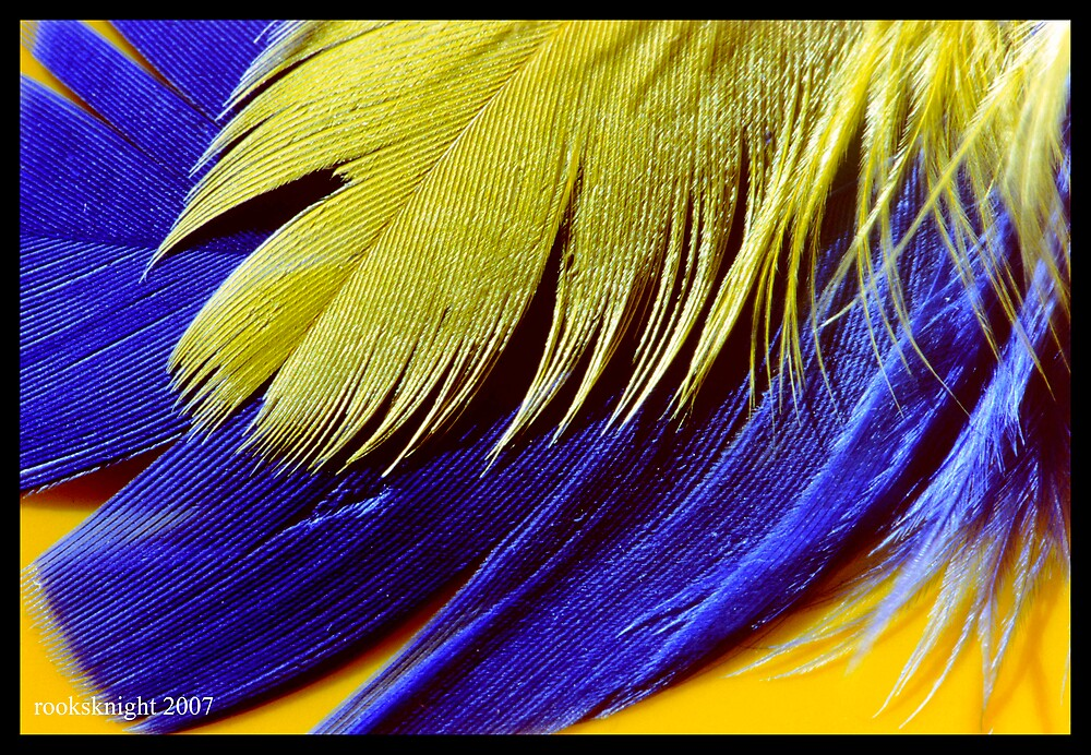 yellow and blue by rooksknight