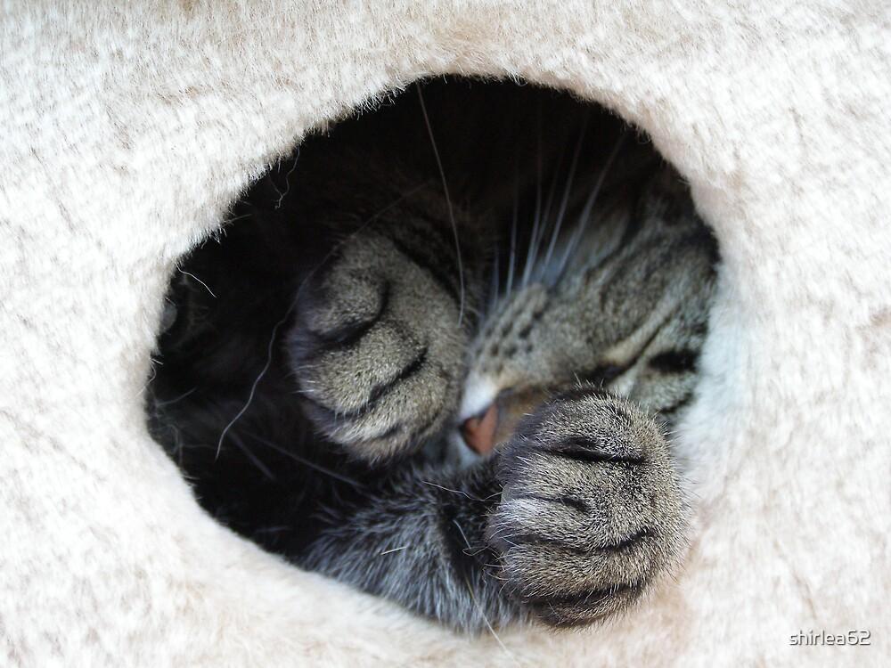 Cat Nap by shirlea62