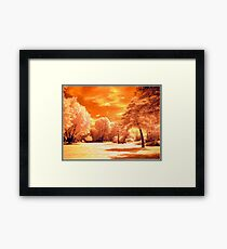 If The Trees Could Talk Framed Print