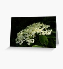 Elder Greeting Card