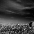 Haystack, harvest, Black & white by Viv van der Holst