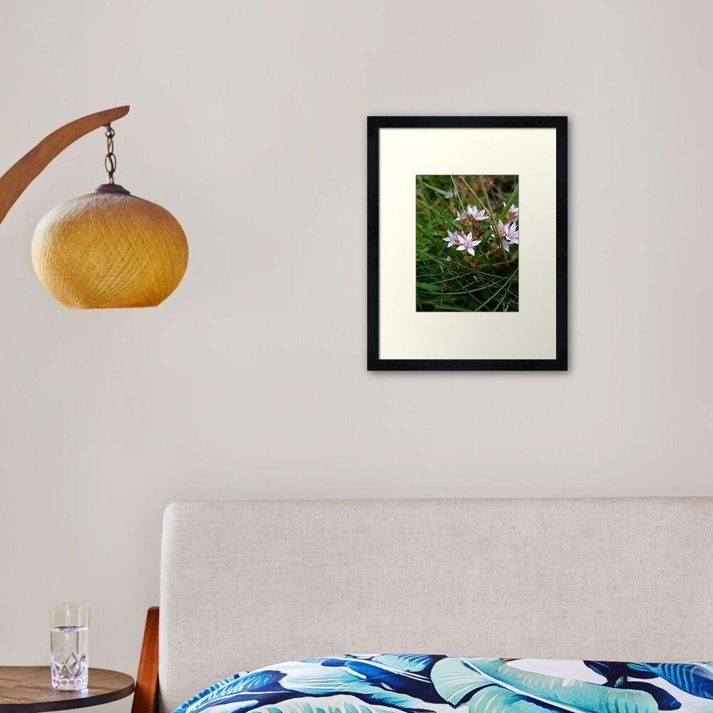 English stonecrop Framed Art Print
