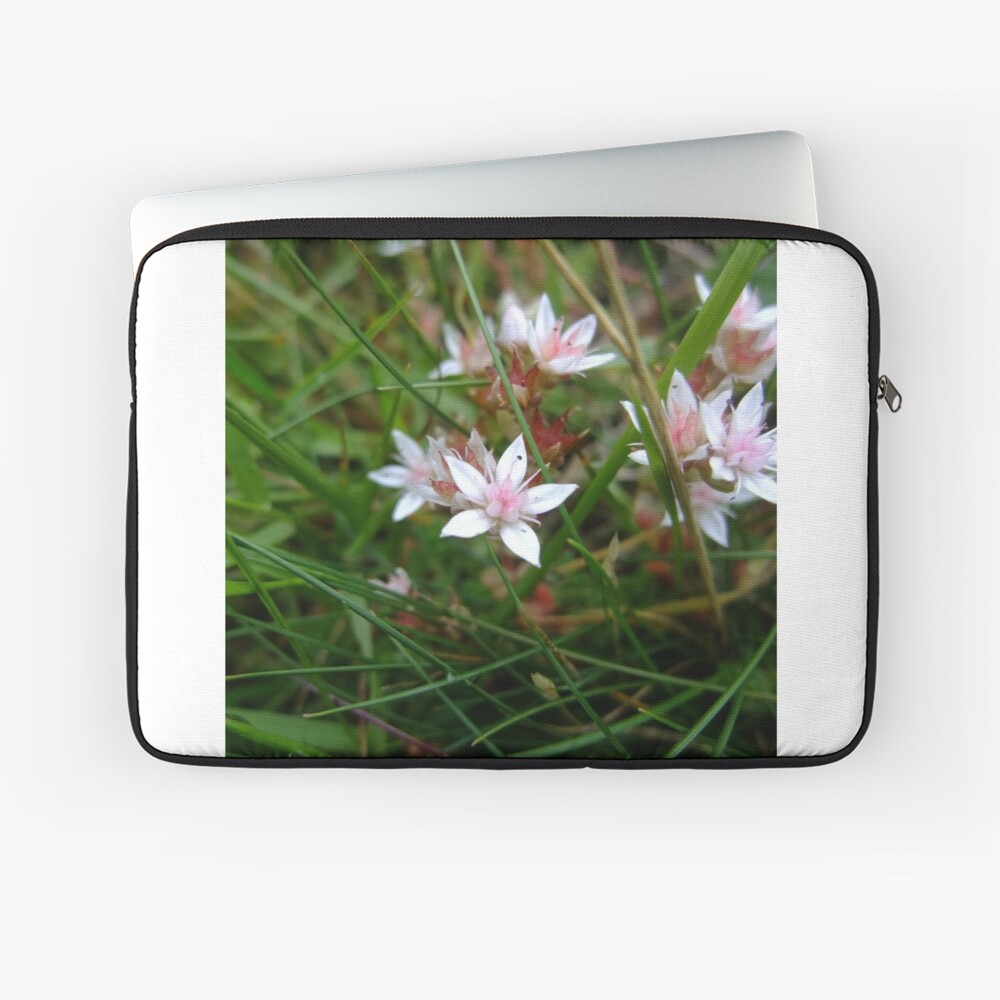 English stonecrop Laptop Sleeve