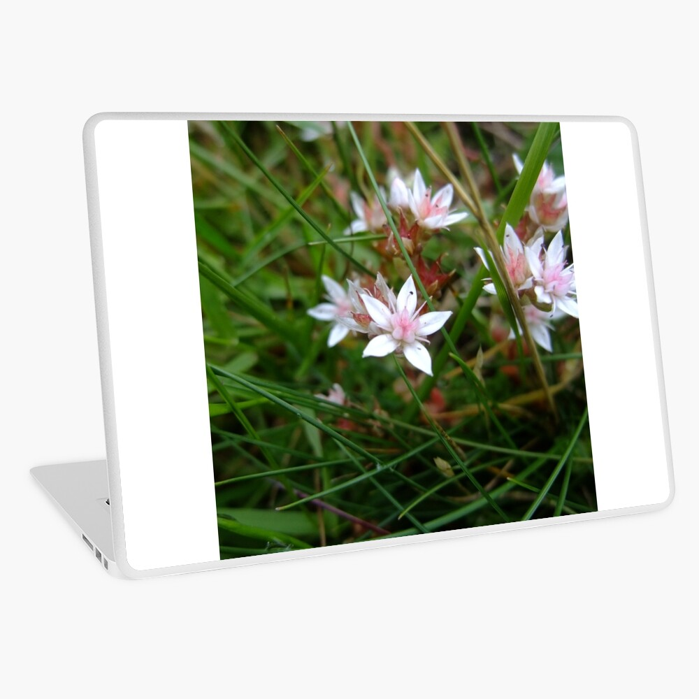 English stonecrop Laptop Skin