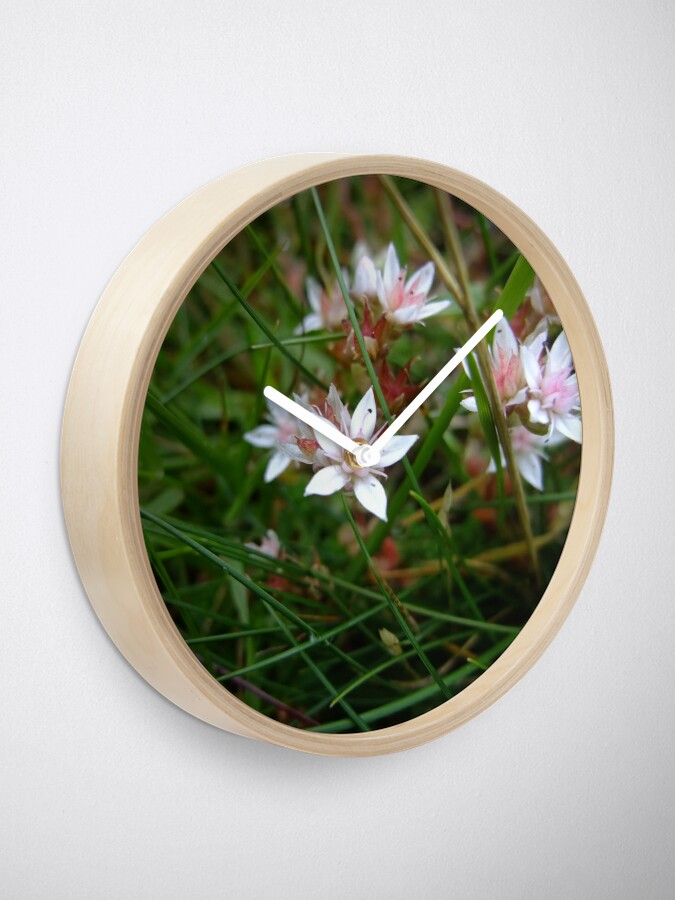 Alternate view of English stonecrop Clock