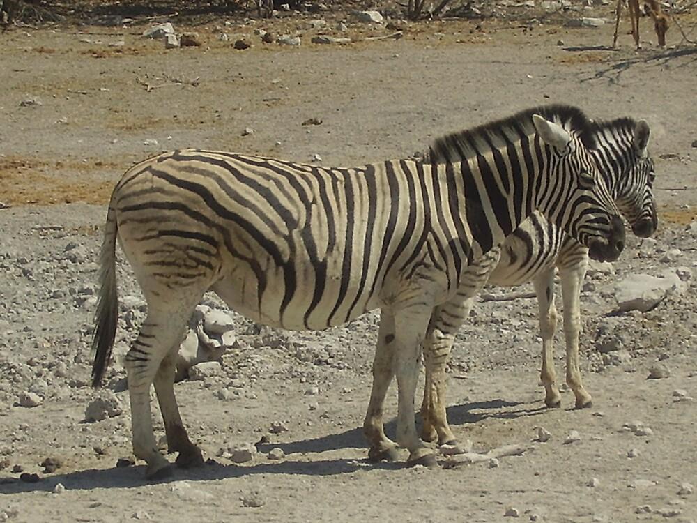zebra's thinking by mj007
