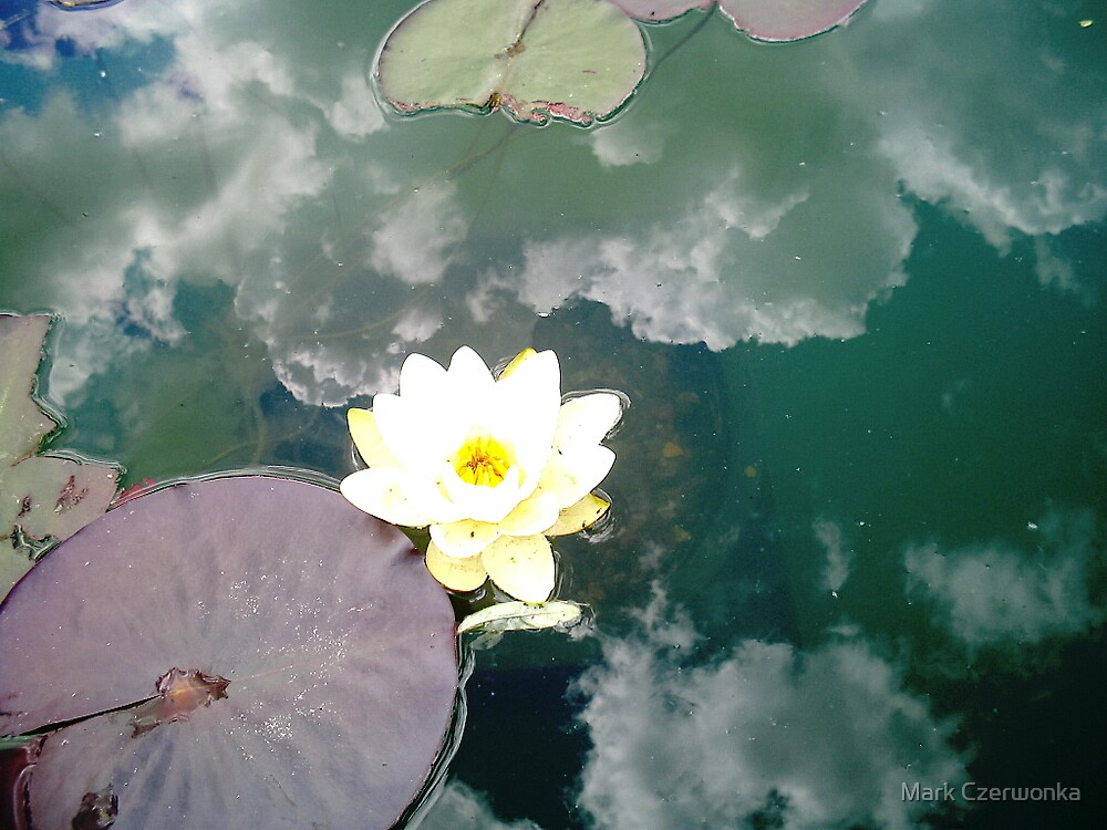 water lily by Mark Czerwonka