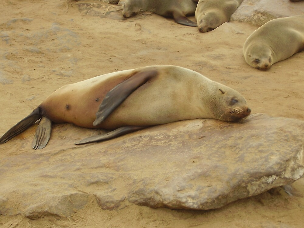 seals relax by mj007