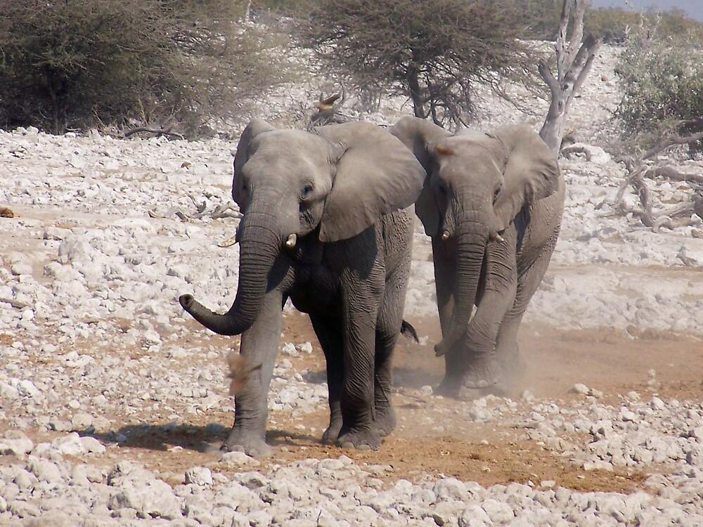 Elephants on the rampage! by tj107