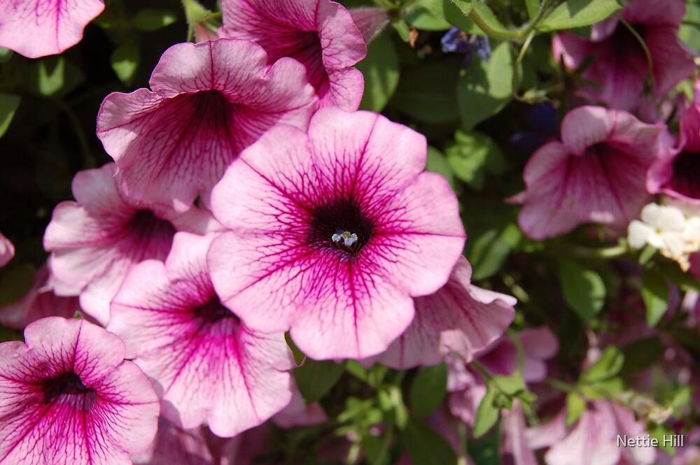 Pink Flower by Nettie Hill
