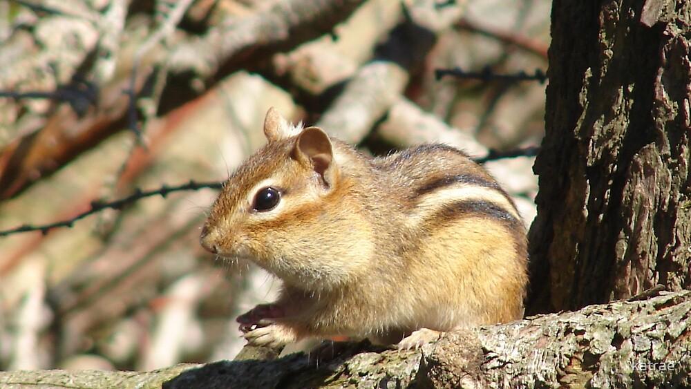 Little Chipmunk by katrae