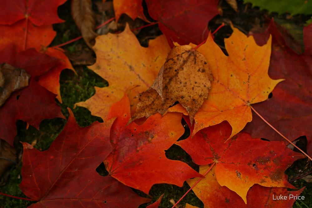 Fallen Maples by Luke Price