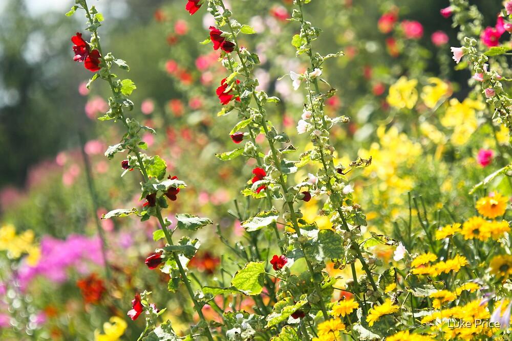 Wild Flowers by Luke Price