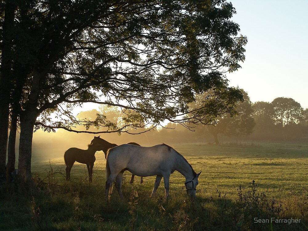 september morn by Sean Farragher