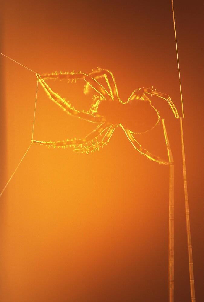 Spider at Sunset by jayobrien