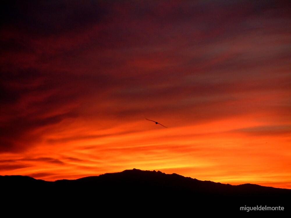 Highflyer at sunset by migueldelmonte