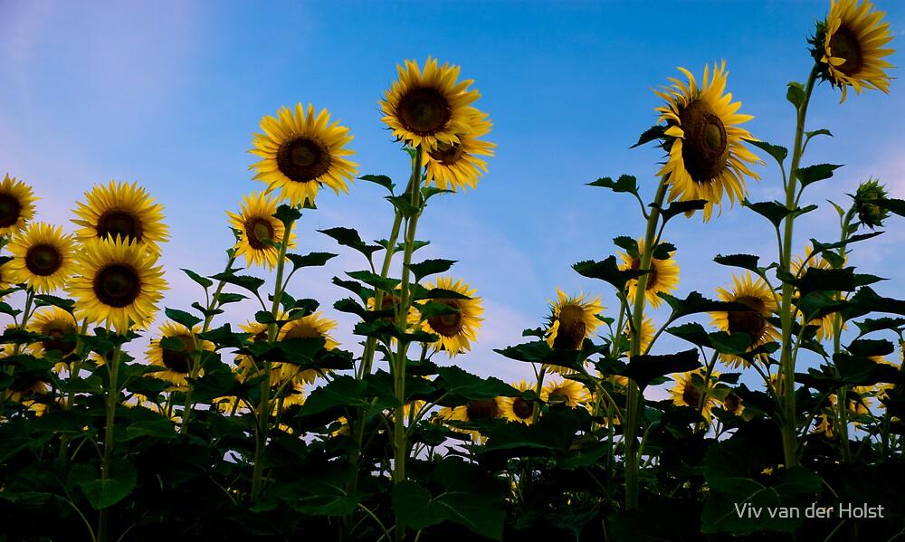 Slovakian sunflower suprise by Viv van der Holst