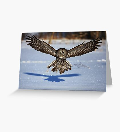 In your face - Great Grey Owl Greeting Card
