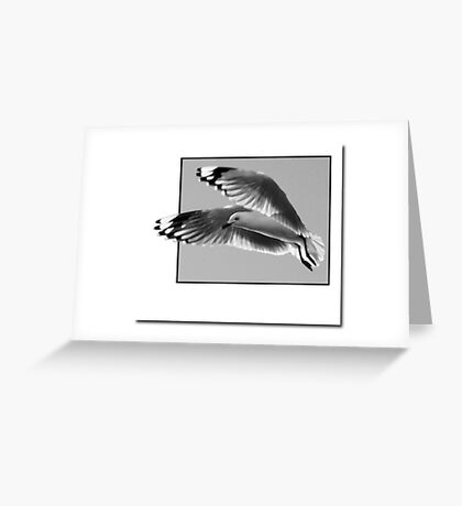 Just a Seagull Greeting Card