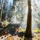 Hoh Rain Forest Rising Mist by Jim Stiles