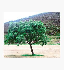 Lone Tree, Donegal, Ireland Photographic Print