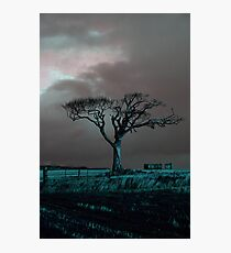 Rihanna Tree, Angry Photographic Print