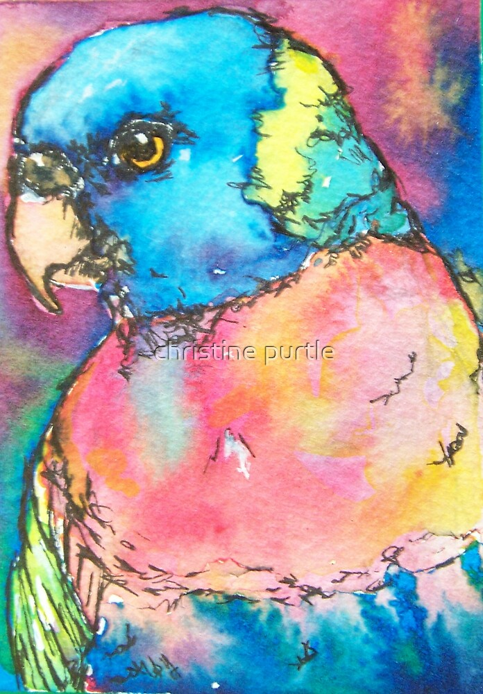 Lorikeet by christine purtle