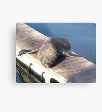 Soaking up the sun... Metal Print