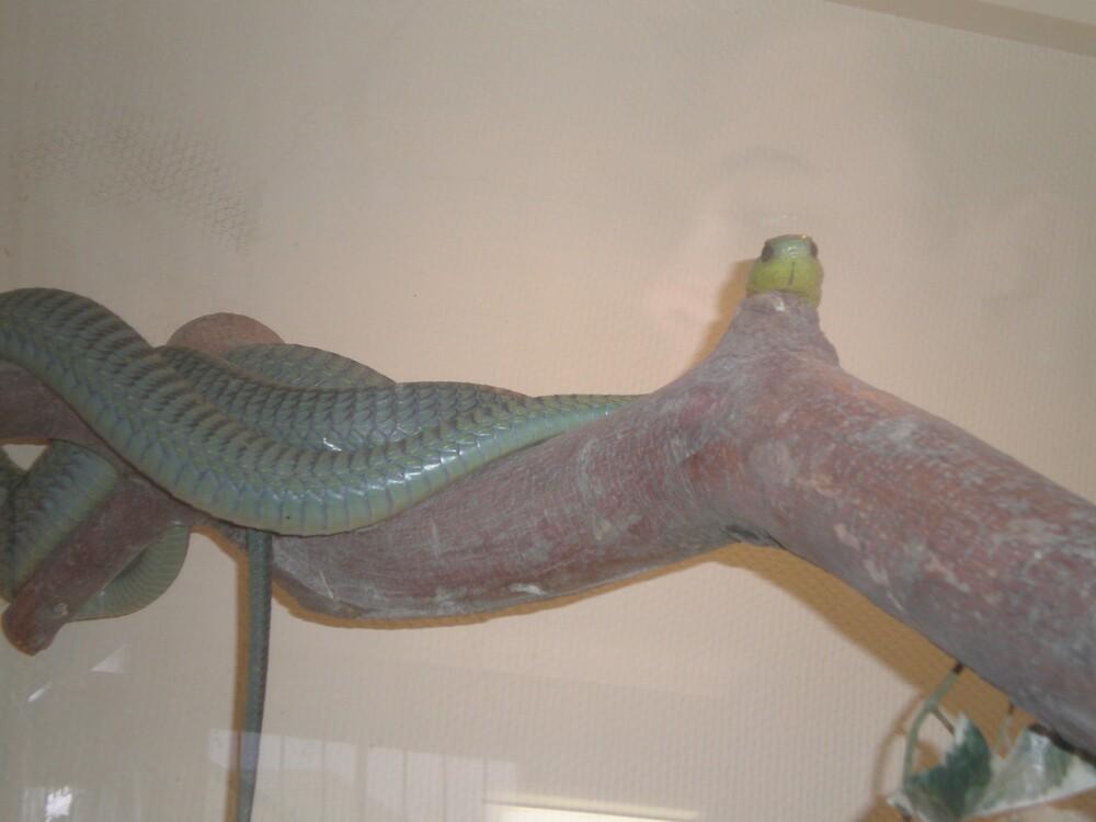 snake by mj007